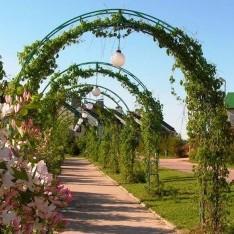 Зеленая арка для прогулок