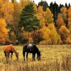 Лошади у леса на Новосходненском шоссе