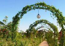 Зеленая арка в кп Золотые Купола